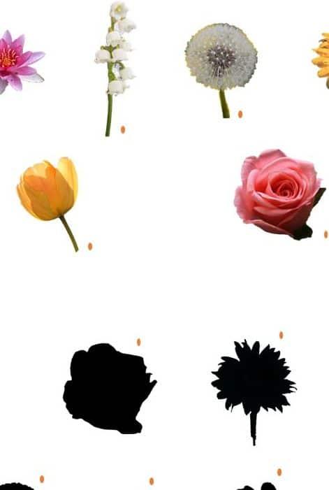 ombre des fleurs - parent au quotidien